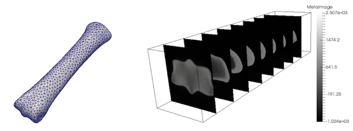 MoFEM: Density mapping from CT scans